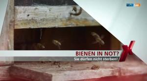 Bienen in Not - Achtung Bombenfund - Filmbiographie Daniel Baumbach